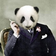 panda_wilde
